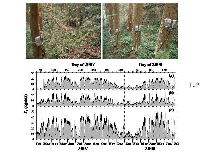 Photographs of the experiment setup for measurements of water use by individual trees